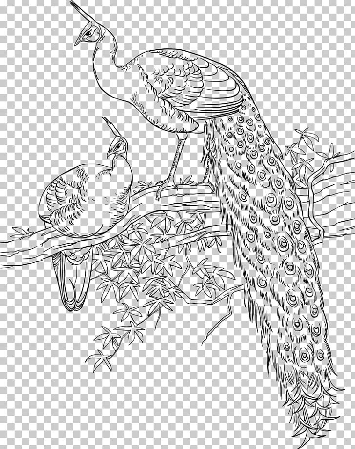 Bird Asiatic Peafowl Coloring Book Drawing PNG, Clipart, Adult, Animal, Animals, Art, Artwork Free PNG Download