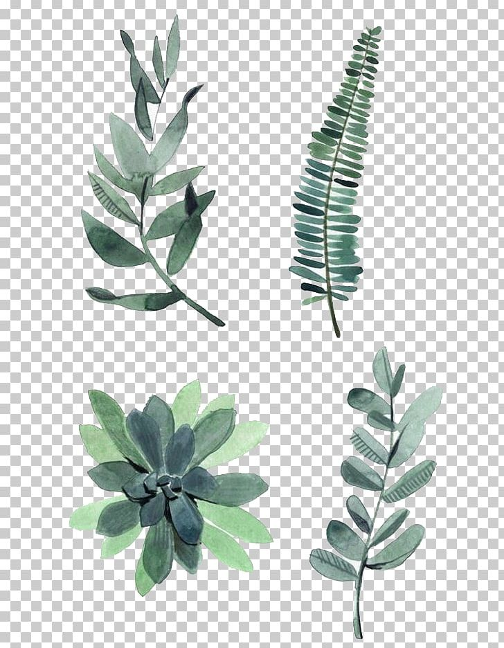 Watercolor Painting Drawing Plant Illustration PNG, Clipart, Autumn, Autumn Leaves, Botany, Branch, Cactaceae Free PNG Download