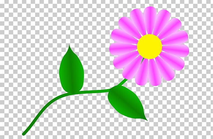 Transvaal Daisy Common Daisy Free Content PNG, Clipart, Color, Common Daisy, Daisy Family, Daisy Images, Drawing Free PNG Download