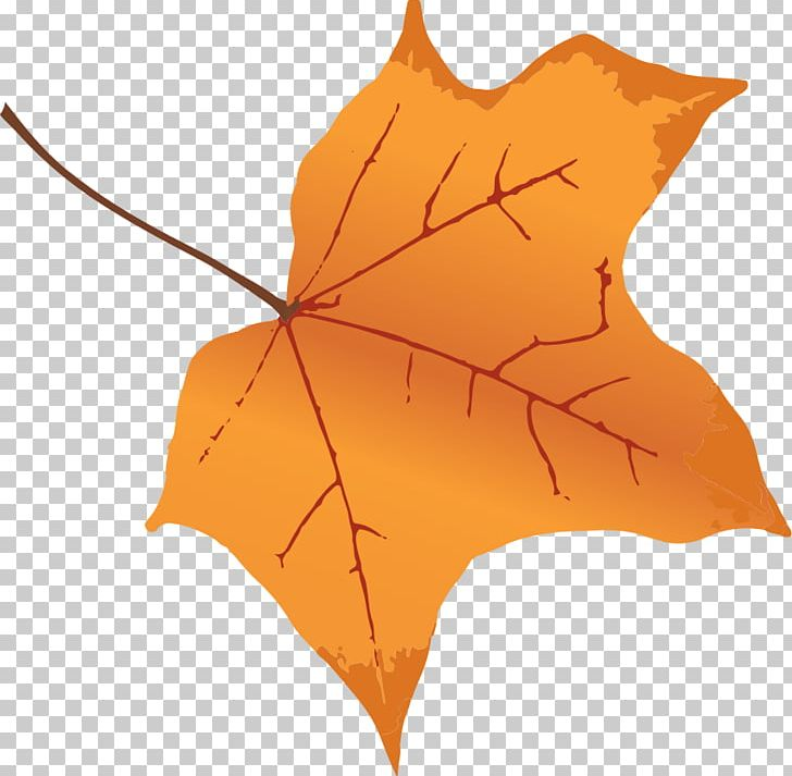 Autumn Leaf Color Tree Maple PNG, Clipart, Autumn, Autumn Leaf Color, Color, Ink, Leaf Free PNG Download