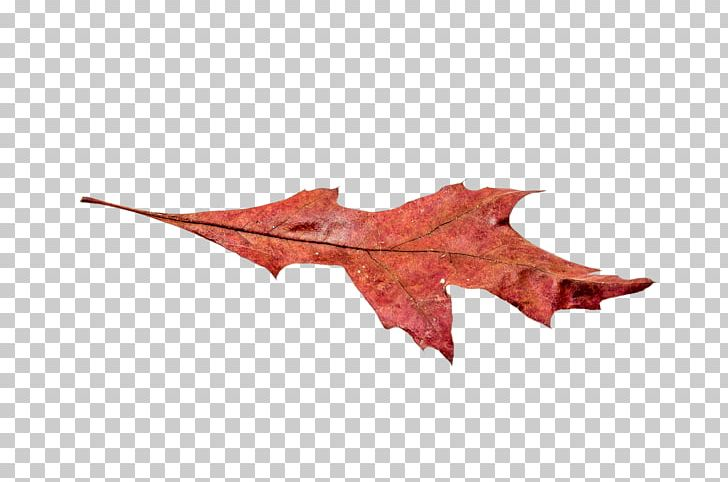 Maple Leaf Autumn Leaf Color PNG, Clipart, Autumn, Autumn Leaf Color, Autumn Leaves, Color, Download Free PNG Download