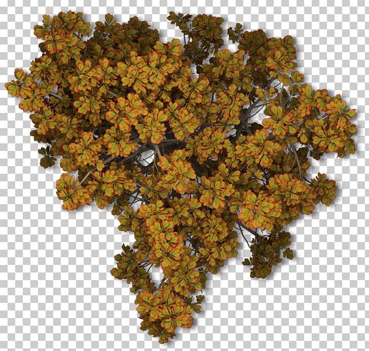 Tree Autumn Leaf Color Plant PNG, Clipart, Autumn, Autumn Leaf Color, Brown, Com, Map Free PNG Download