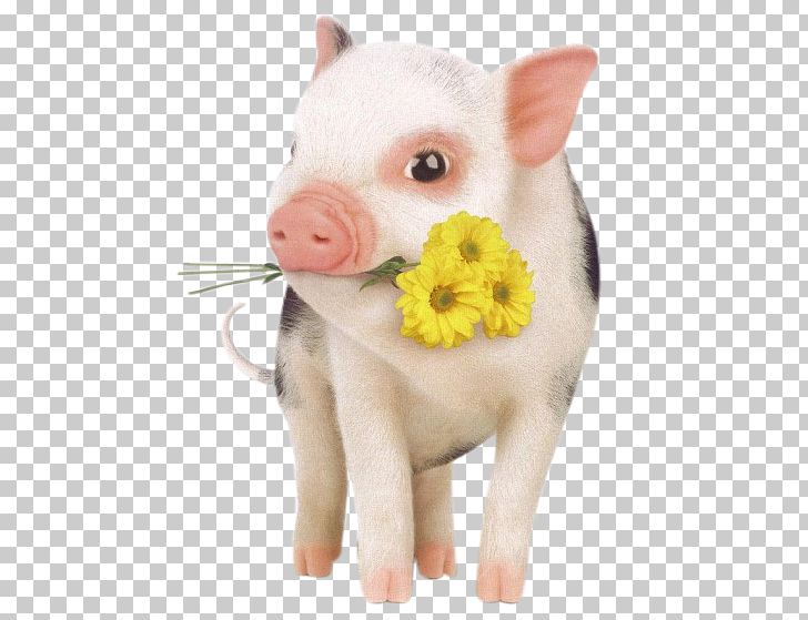 Dog Hogs And Pigs Pet Domestication PNG, Clipart, Adorable, Alibaba Group, Animal, Animal Slaughter, Chong Free PNG Download