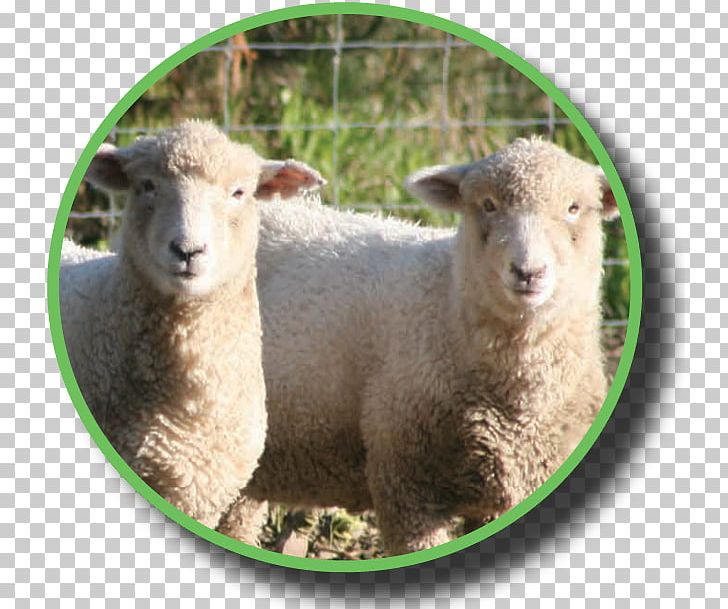Sheep Industry Industrial Policy Dairy Federated Farmers PNG