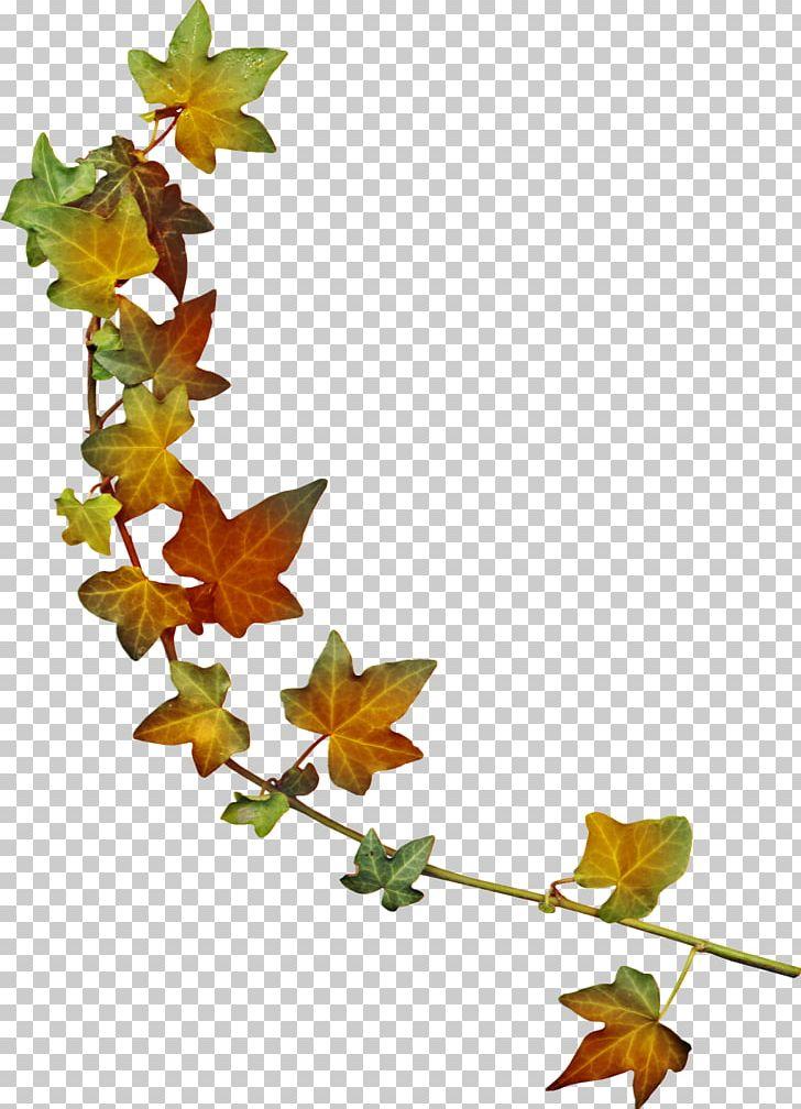 Maple Leaf Autumn PNG, Clipart, Autumn, Branch, Computer Icons, Dahlia, Encapsulated Postscript Free PNG Download