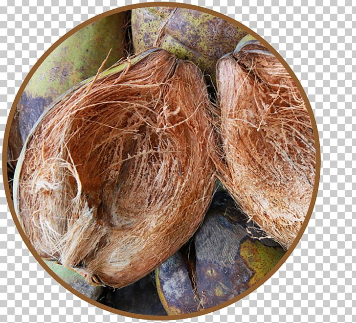Commodity Ingredient PNG, Clipart, Coconut Husk, Commodity, Ingredient, Others Free PNG Download