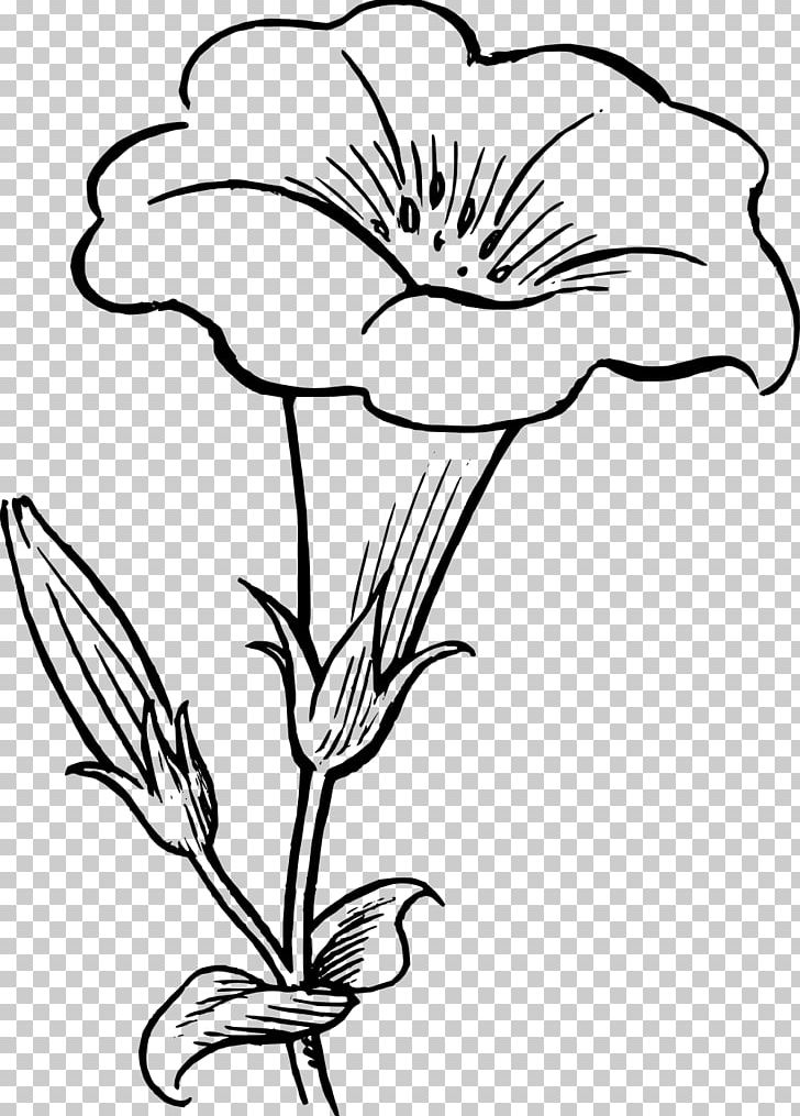 Flower black and white drawing. Png clipart artwork