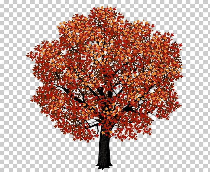 Red Maple Japanese Maple Tree Portable Network Graphics PNG, Clipart, Autumn, Bonsai, Branch, Eastern Hemlock, Japanese Maple Free PNG Download