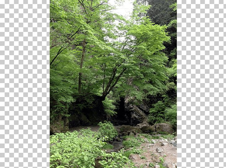 Temperate Coniferous Forest Valdivian Temperate Rain Forest Temperate Broadleaf And Mixed Forest Tropical And Subtropical Moist Broadleaf Forests PNG, Clipart, Biome, Deciduous, Ecosystem, Flora, Forest Free PNG Download