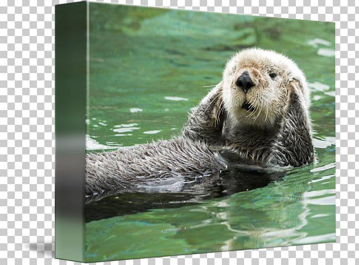 Otter bay monterey