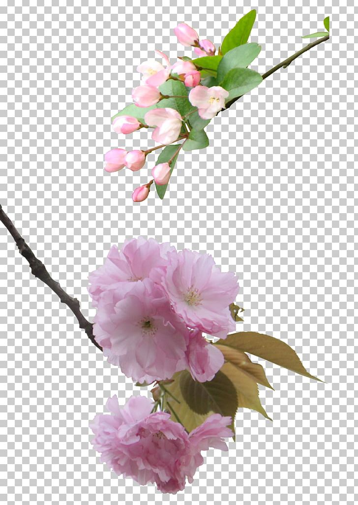 National Cherry Blossom Festival PNG, Clipart, Artificial Flower, Blossom, Blossoms, Branch, Cherry Free PNG Download