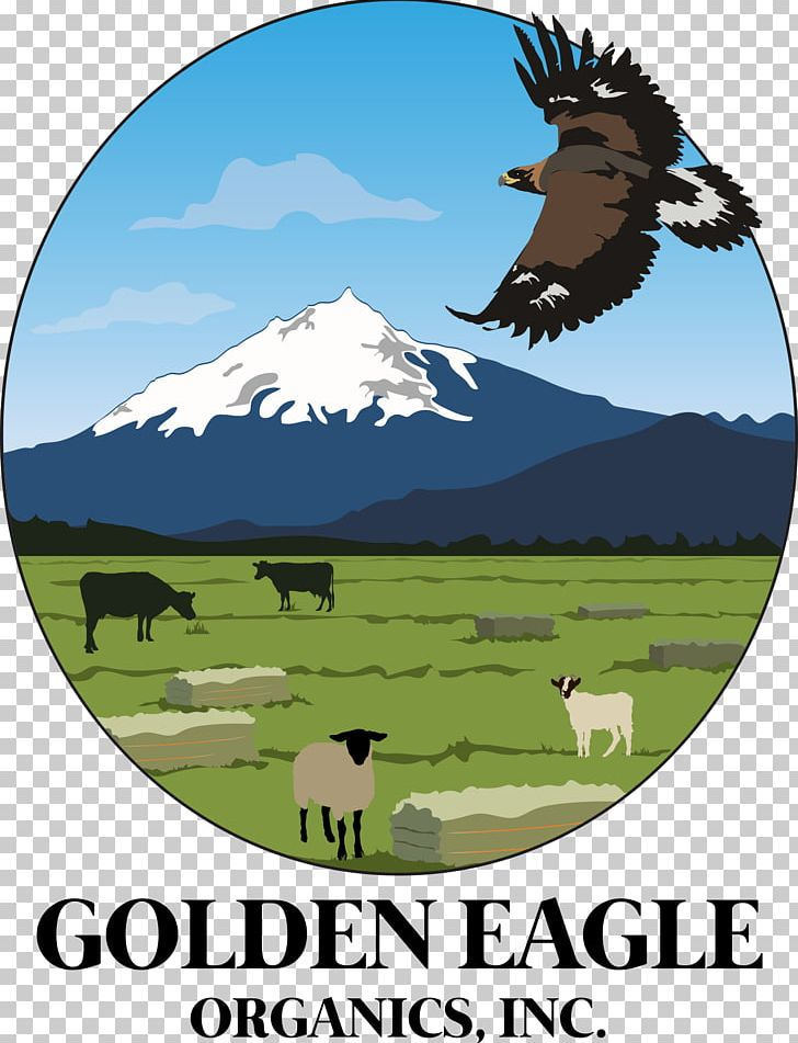 Golden Eagle Organics PNG, Clipart, Beef, Cattle, Cattle Like Mammal, Central Oregon, Eagle Free PNG Download