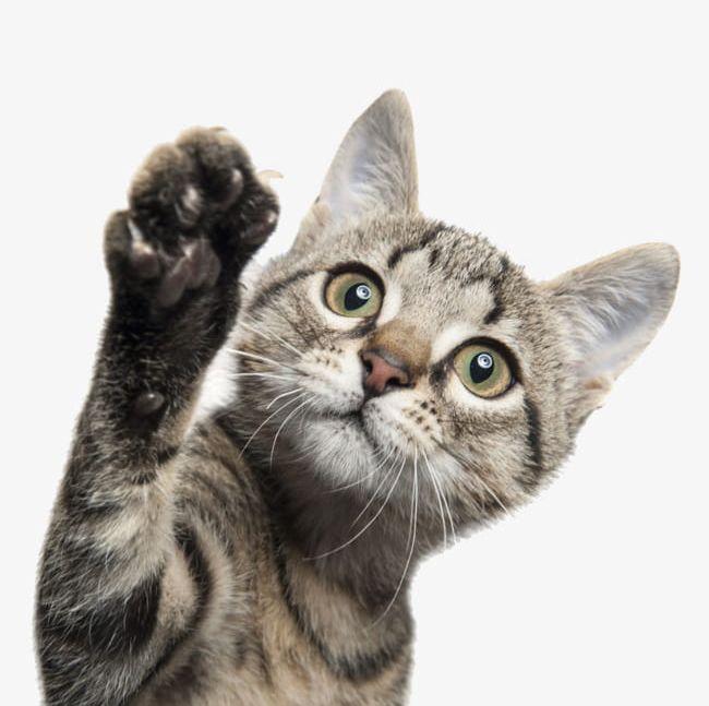 The Waving Cat PNG, Clipart, Cat, Cat Clipart, Cats, Cats Paw ...