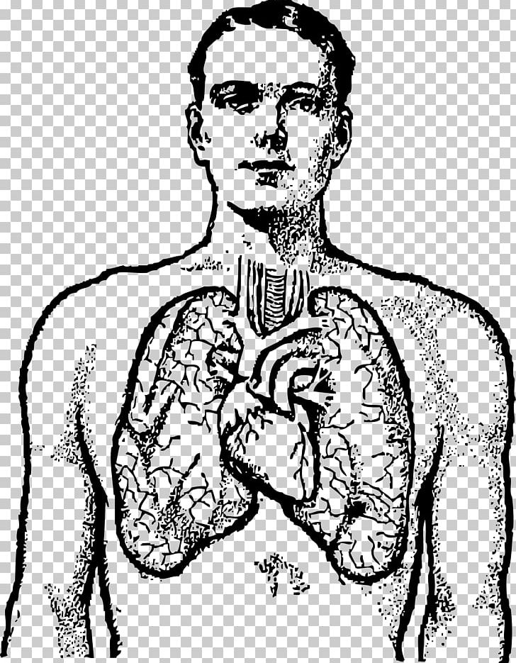 Png Transparent Library Heart And Lungs Clipart - Lungs And Heart Png, Png  Download - 558x680(#5700213) - PngFind