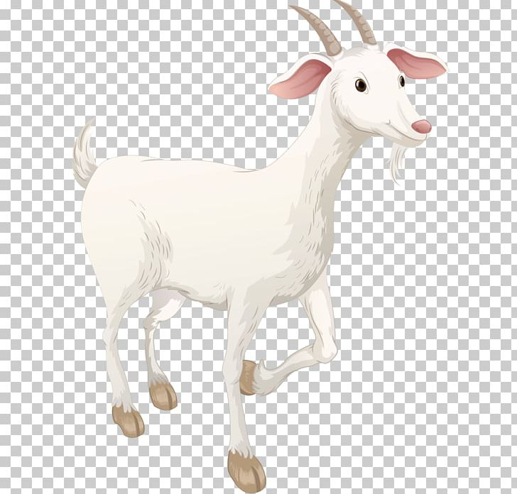 Sheep Boer Goat Highland Cattle Pasture Caprinae PNG, Clipart, Animal, Animal Figure, Animals, Boer Goat, Caprinae Free PNG Download
