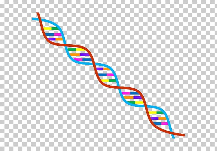 Genealogical DNA Test Genetics DNA Profiling Genetic Testing PNG