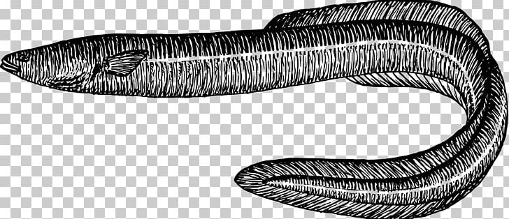 Electric Eel Drawing Sargasso Sea PNG, Clipart, Angle ... - photo#25