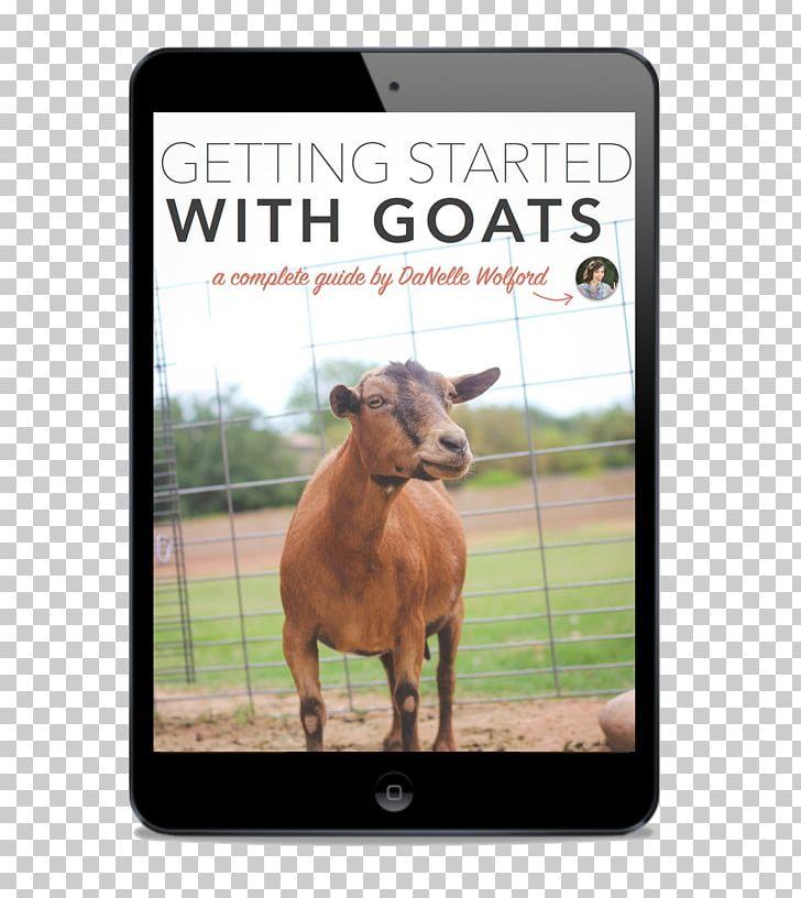 Nigerian Dwarf Goat Cattle Pygmy Goat Boer Goat Kiko Goat