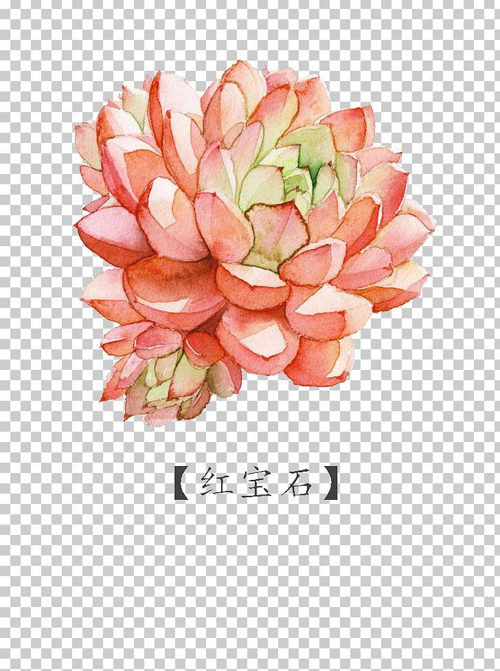 Watercolor Painting Succulent Plant PNG, Clipart, Artificial Flower, Cartoon, Color, Color , Dahlia Free PNG Download