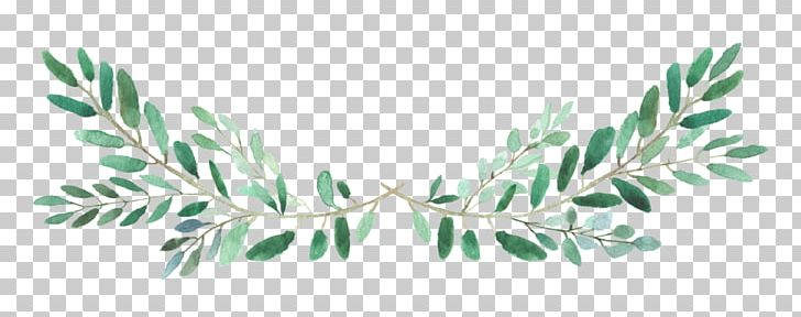 Instagram Video YouTube PNG, Clipart, Accent Wall, Blog, Branch, Branches, Flora Free PNG Download