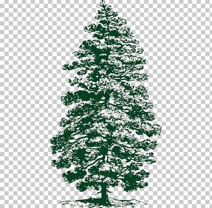 Ponderosa Pine Evergreen Fir PNG, Clipart, Black And White, Branch, Christmas Decoration, Christmas Ornament, Christmas Tree Free PNG Download