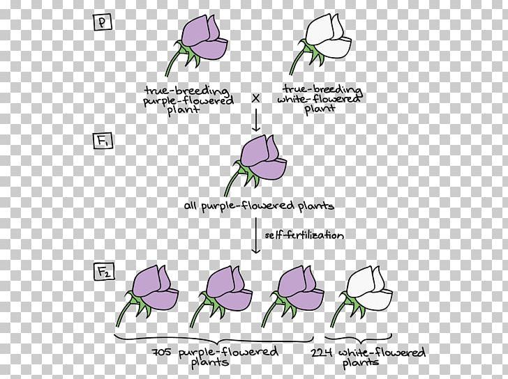 Mendelian Inheritance Biology Genetics Video Lesson PNG, Clipart, Angle, Area, Aula, Biology, Brand Free PNG Download