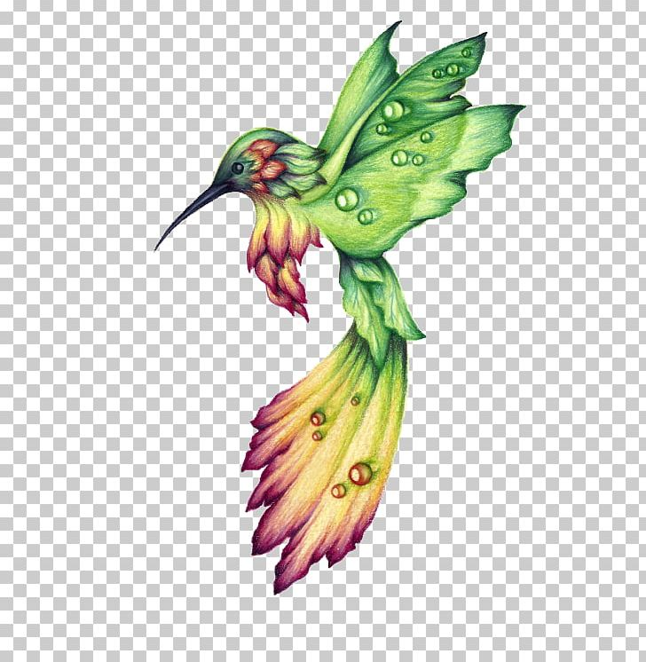 Hummingbird Drawing Birds Watercolor Painting PNG, Clipart, Animal, Beak, Bird, Color, Colored Pencil Free PNG Download