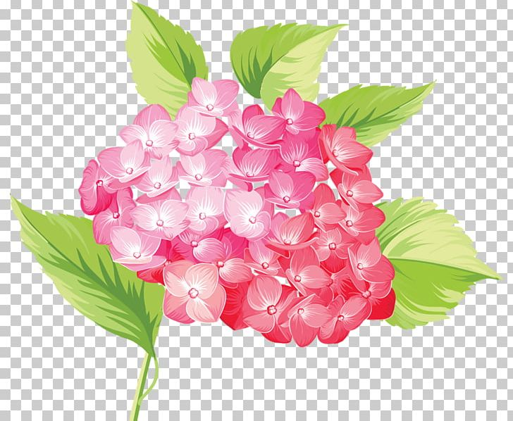 Flower PNG, Clipart, Beautiful Roses, Clip Art, Cornales, Cut Flowers, Download Free PNG Download