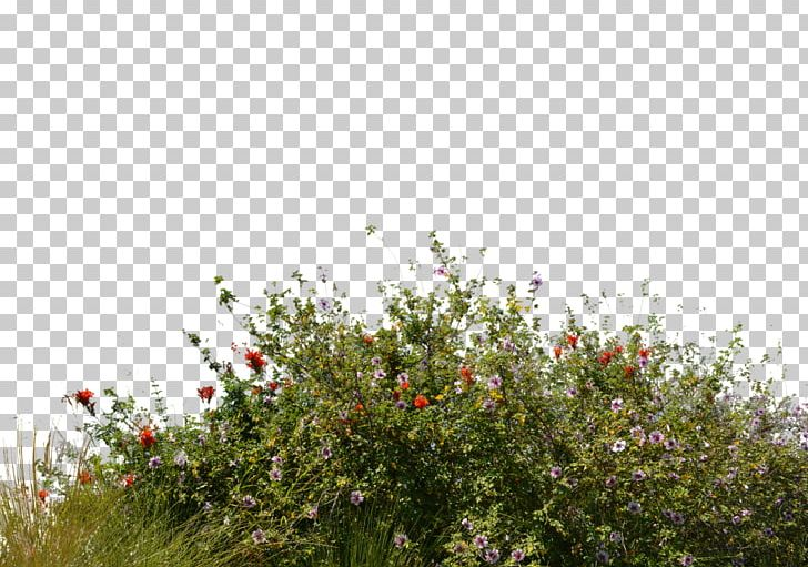 Flower Garden Lawn Tree PNG, Clipart, Artificial Flower, Blossom, Bushes, Flora, Flower Free PNG Download