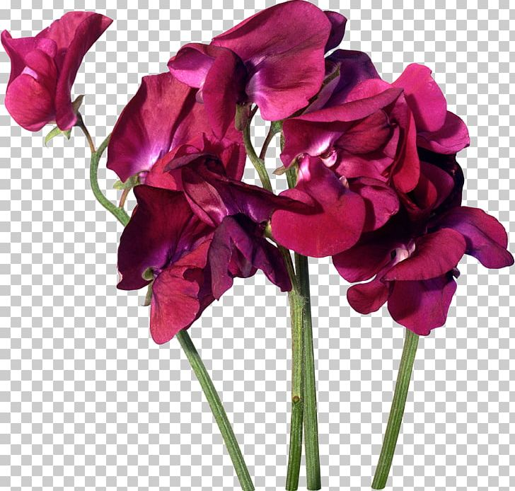 Cut Flowers Purple Pink Rosaceae PNG, Clipart, Annual Plant, Artificial Flower, Beach Rose, Cut Flowers, Flower Free PNG Download
