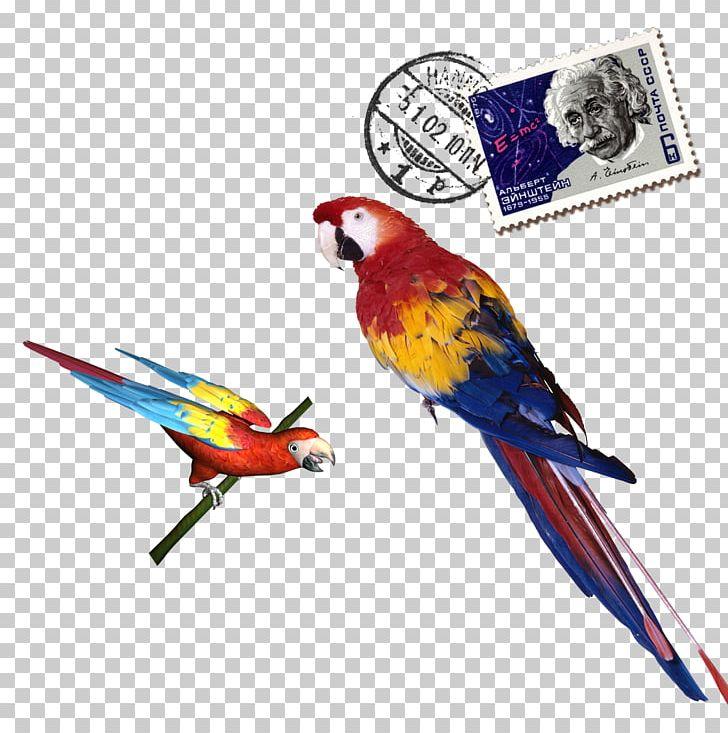 Parrot PNG, Clipart, Animals, Bird, Color, Coloring, Color Pencil Free PNG Download