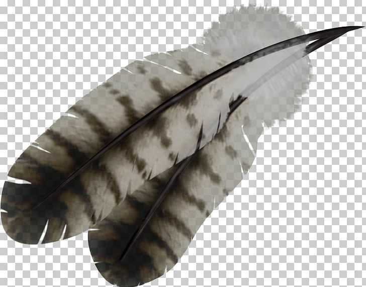 Feather PNG, Clipart, Feather Free PNG Download