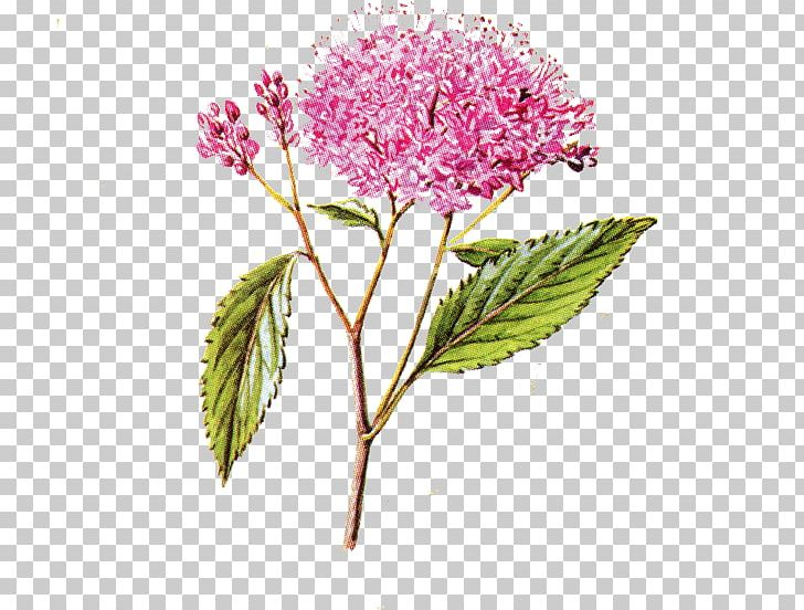 Flower Cherry Blossom Portable Network Graphics PNG, Clipart, Blossom, Cherries, Cherry Blossom, Computer Icons, Desktop Wallpaper Free PNG Download