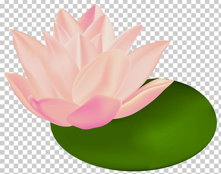 Nymphaea Alba Nelumbo Nucifera Egyptian Lotus Png Clipart Aquatic