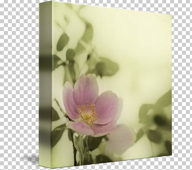 Still Life Photography Floral Design Rose Family PNG, Clipart, Art, Blossom, Family, Flora, Floral Design Free PNG Download