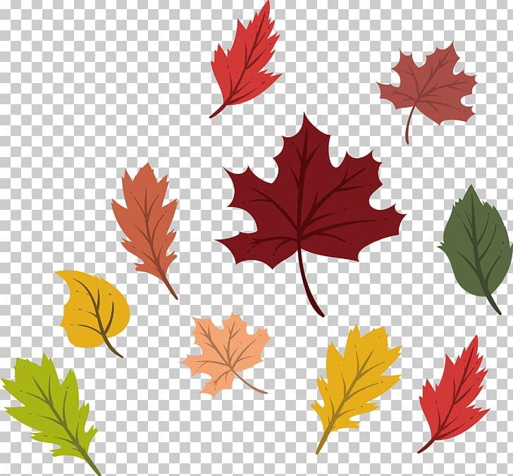Maple Leaf Autumn Deciduous PNG, Clipart, Autumn Leaves, Autumn Maple Leaves, Autumn Vector, Color, Color Maple Leaves Free PNG Download