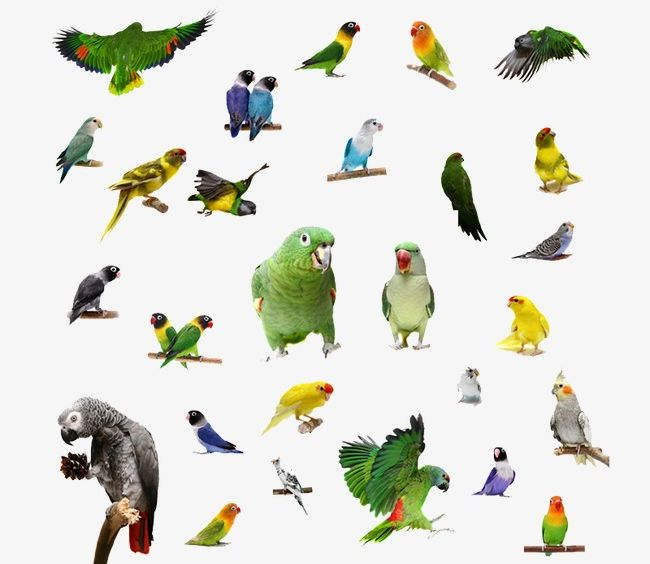 Parrot PNG, Clipart, Animal, Animal Material, Bird, Material, Parrot Free PNG Download