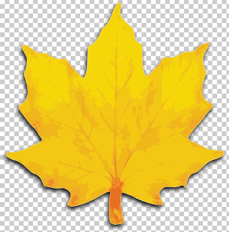 Autumn Leaf Color Yellow Maple Leaf PNG, Clipart, Autumn, Autumn Leaf Color, Clipart, Clip Art, Color Yellow Free PNG Download
