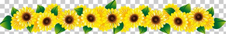 Common Sunflower Stock Photography PNG, Clipart, Abstract Lines, Commodity, Curved Lines, Dividing Line, Dotted Line Free PNG Download