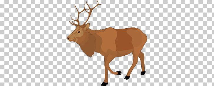 Moose PNG, Clipart,  Elk, Moose Free PNG Download