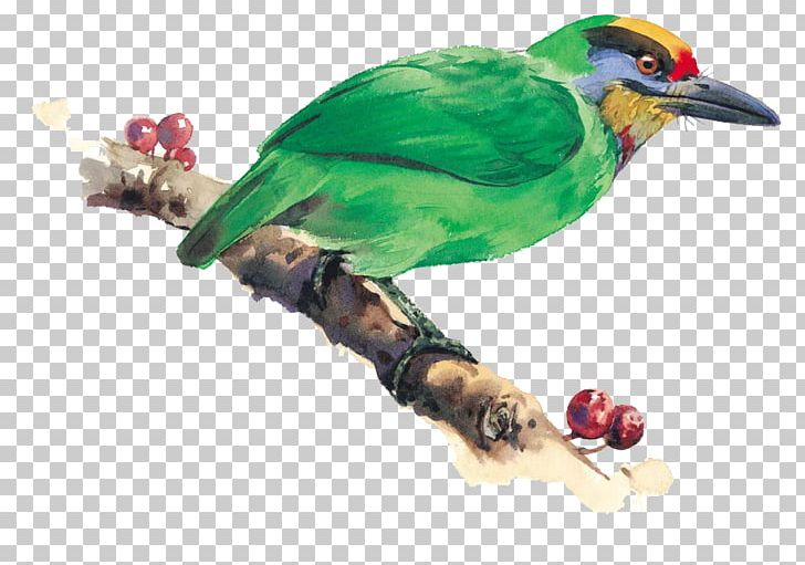 Bird-and-flower Painting Watercolor Painting Illustration PNG, Clipart, Animal, Art, Beak, Bird, Bird And Flower Painting Free PNG Download
