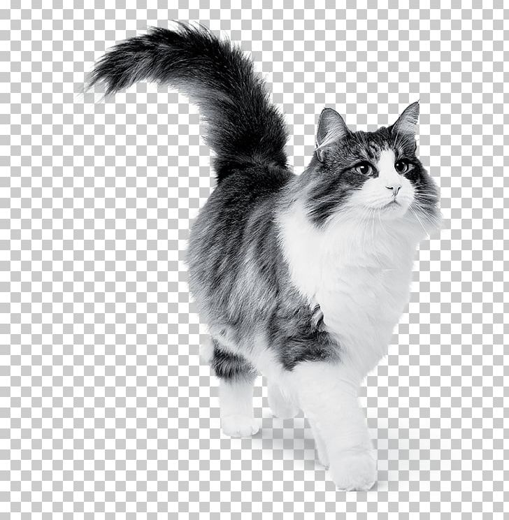 Cat Food Dog Kitten PNG, Clipart, Animals, Black And White, Breed, Carnivoran, Cat Free PNG Download