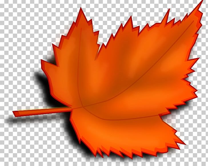 Autumn Leaf Color Red PNG, Clipart, Autumn, Autumn Leaf Color, Blog, Color, Flower Free PNG Download