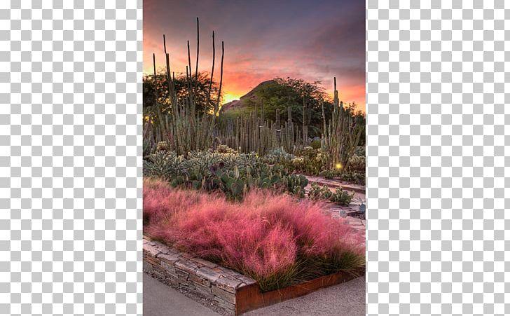 Desert Botanical Garden Scottsdale Tempe Sedona Grand Falls PNG, Clipart, Arizona, Beautiful Garden, Botanical, Botanical Garden, Computer Wallpaper Free PNG Download