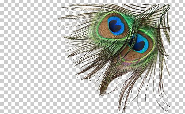 Bird Feather Peafowl PNG, Clipart, Animals, Asiatic Peafowl, Beak, Cartoon, Closeup Free PNG Download