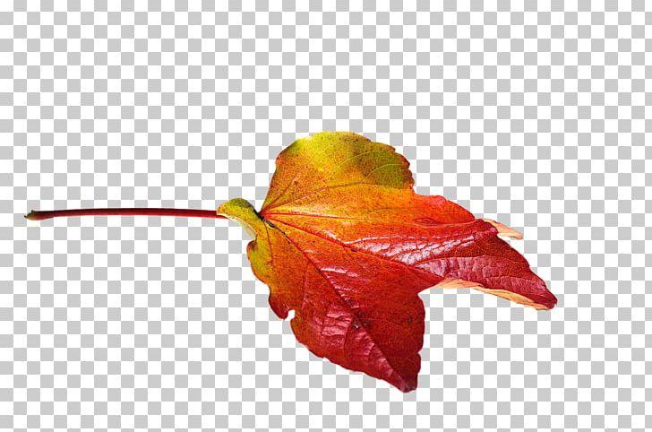 Autumn Leaf Color PNG, Clipart, Autumn, Autumn Leaf Color, Autumn Leaves, Color, Download Free PNG Download