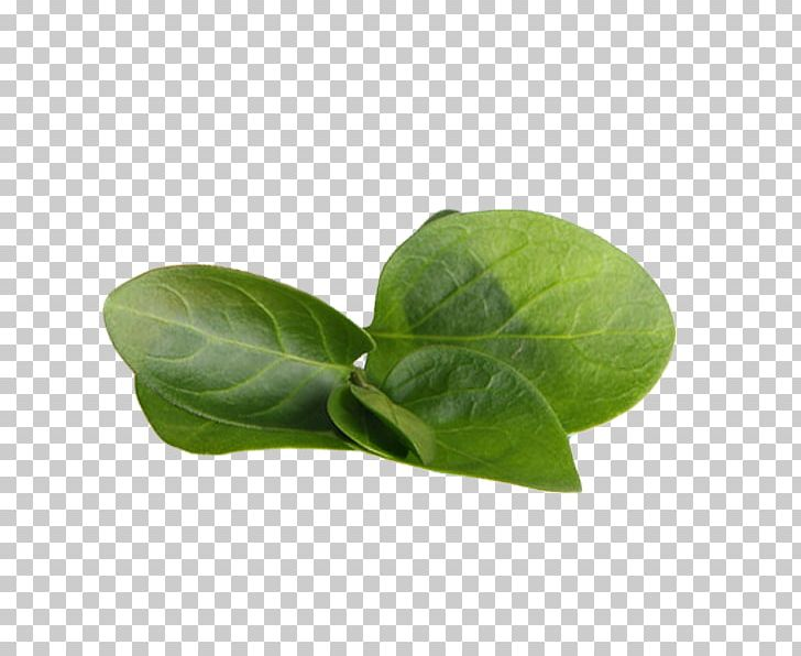 Tea Leaf Png, Vector, PSD, and Clipart With Transparent Background for Free  Download | Pngtree