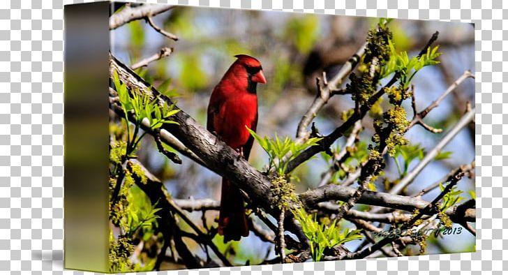Finches Fauna Beak Wildlife PNG, Clipart, Beak, Bird, Branch, Cardinal, Fauna Free PNG Download