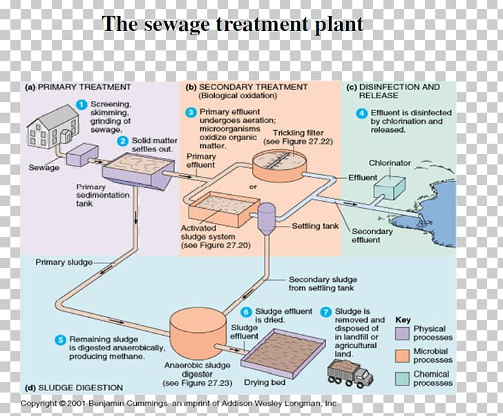 Microorganism Water Treatment Sewage Treatment Activated