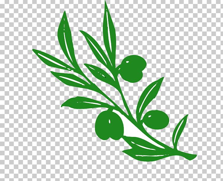 Olive Branch Olive Branch Png Clipart Black And White Branch Cartoon Trees With Branches Drawing Flora
